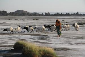 Djibouti_sal_Endoethiopia_lago