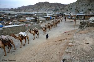camel_caravan_brehale_danakil_1